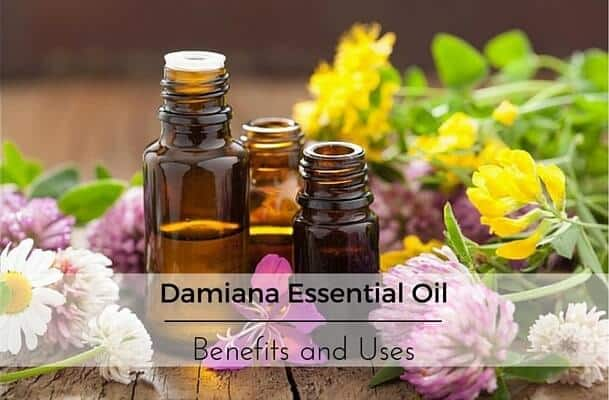 Damiana Essential Oil Benefits and Uses