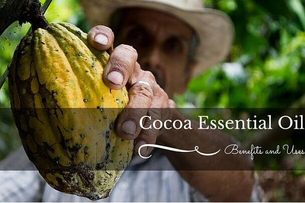 Cocoa plant used to make essential oil
