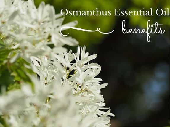Osmanthus Essential Oil Benefits