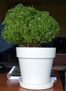 plants in home to lower humidity