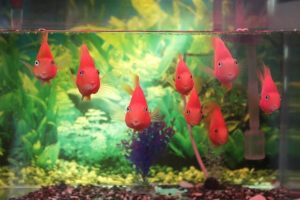 using a fish tank for humidity in the home