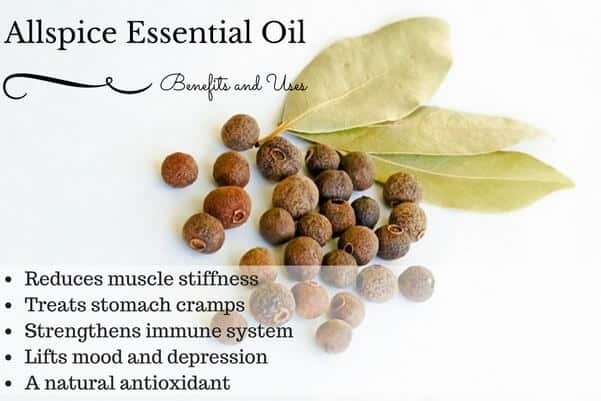 Allspice Essential Oil Health Benefits and Uses Listed
