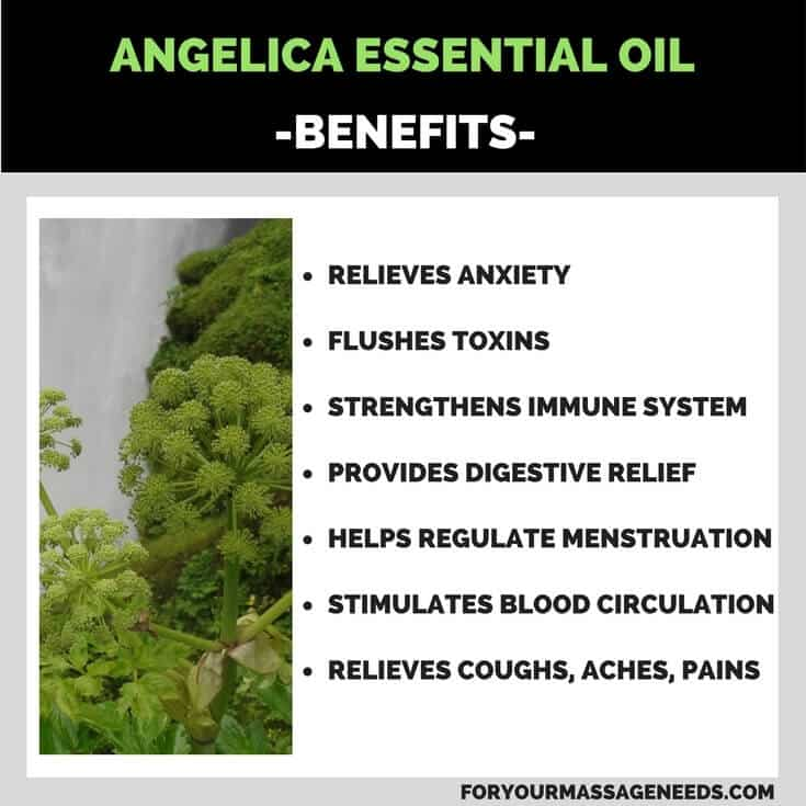 Angelica Essential Oil Health Benefits Listed