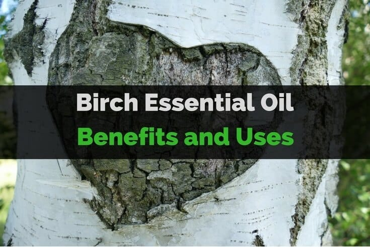 Birch Essential Oil Benefits and Uses