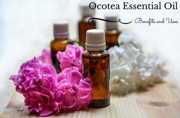 Ocotea Essential Oil Benefits and Uses