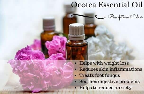 Ocotea Essential Oil Health Benefits and Uses Listed