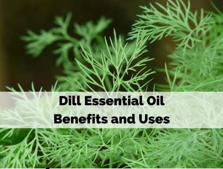 Dill Essential Oil Benefits and Uses