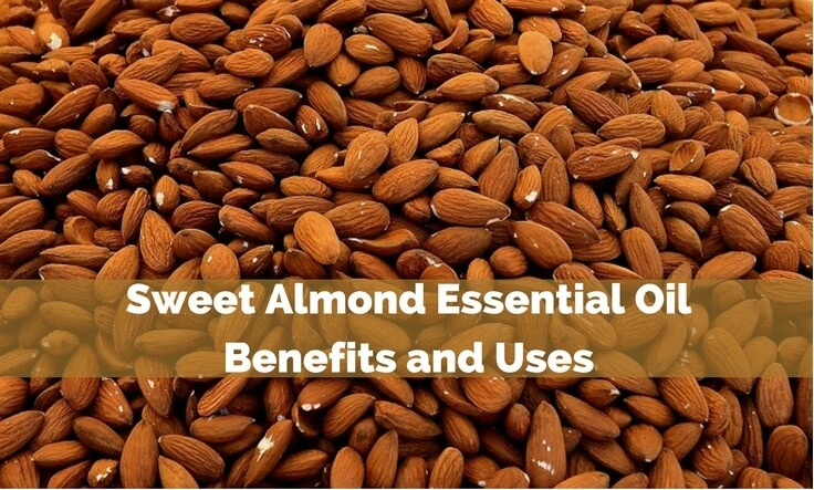 Sweet Almond Essential Oil Benefits and Uses