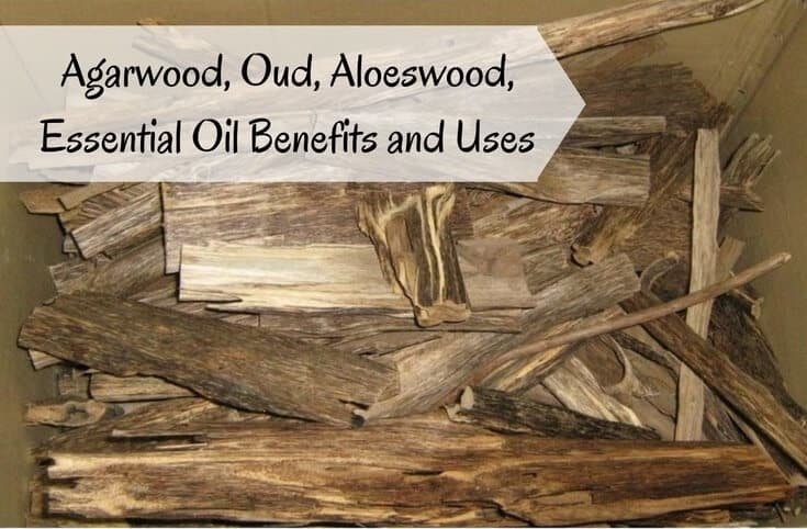 Agarwood, Oud, Aloeswood Essential Oil Benefits and Uses