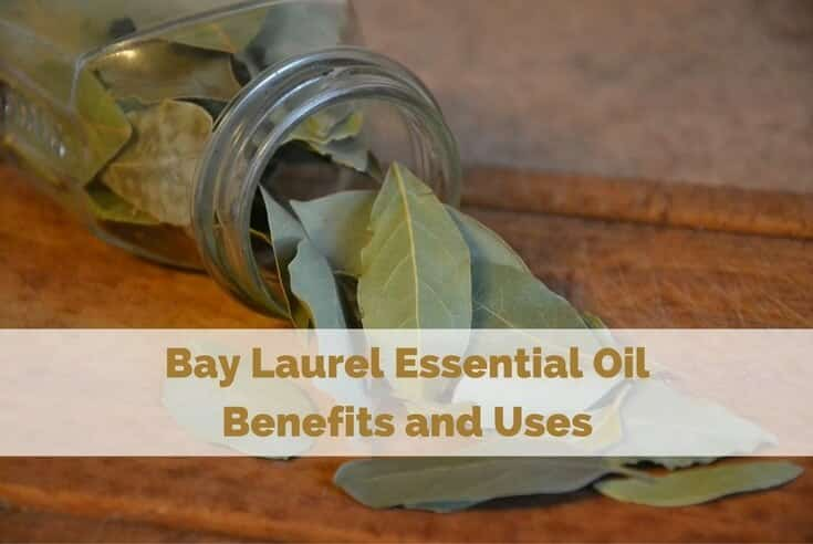Bay Laurel Essential Oil Benefits and Uses