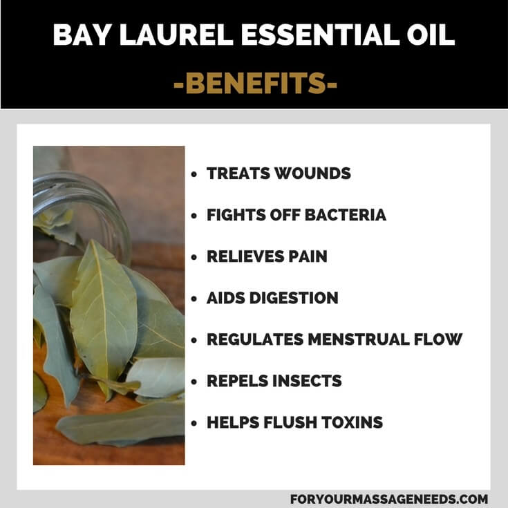 Bay Laurel Essential Oil Health Benefits and Uses Listed