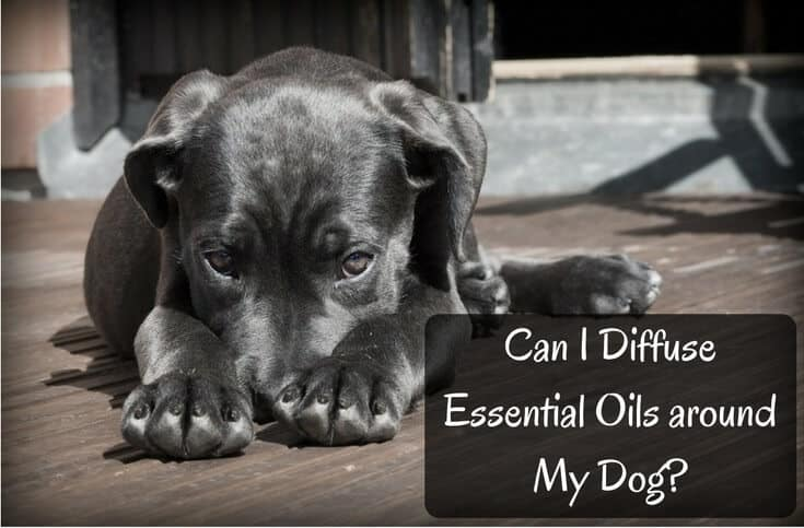 Can You Diffuse Essential Oils Around Dogs