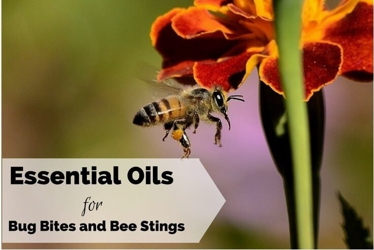 Essential Oils for Bug Bites Mosquito and Bee Stings