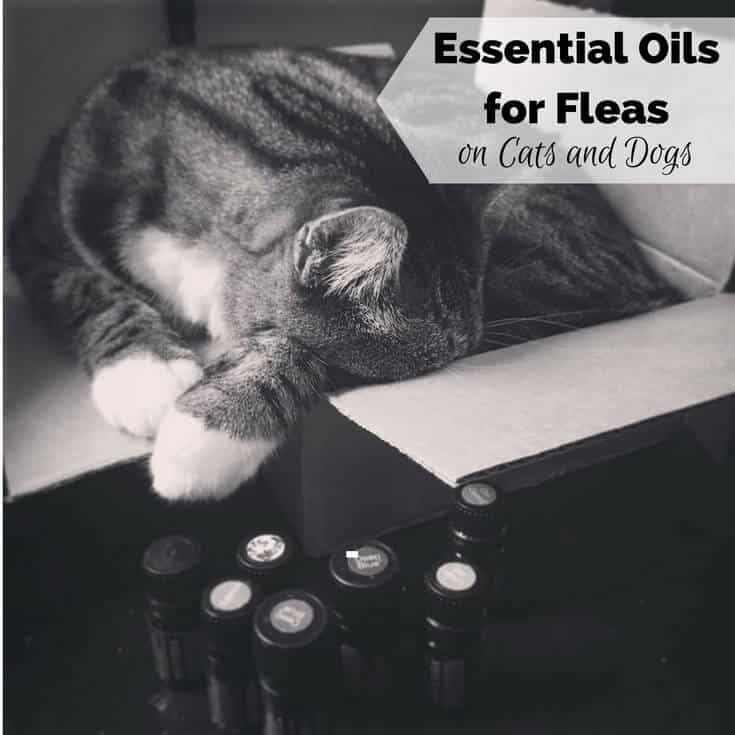 Essential Oils for Fleas on Dogs, Cats, and Pets at Home