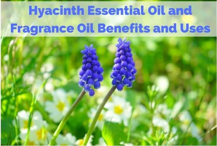 Hyacinth Essential Oil Fragrance Oil Benefits and Uses