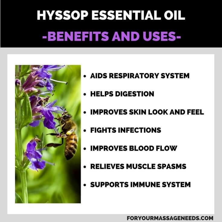 Hyssop Essential Oil Health Benefits and Uses Listed