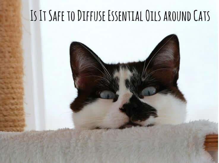 is it safe to diffuse essential oils around cats for your massage needs. Black Bedroom Furniture Sets. Home Design Ideas