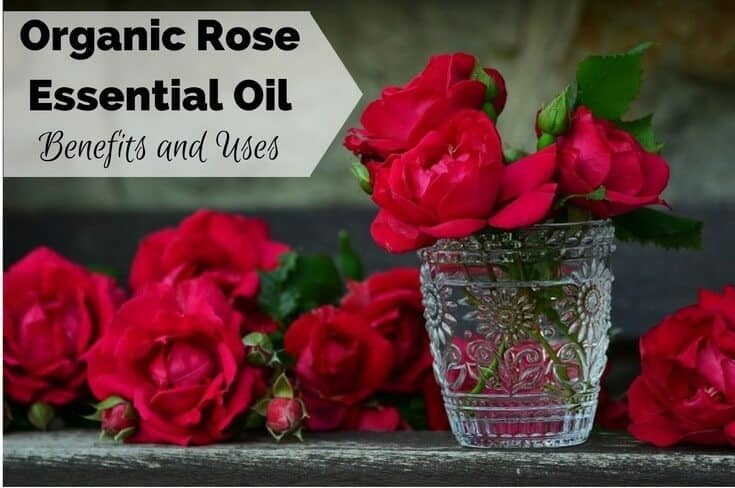 Organic Rose Essential Oil Benefits and Uses