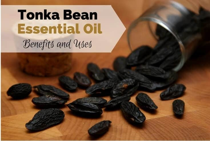 Tonka Bean Essential Oil Benefits and Uses Image