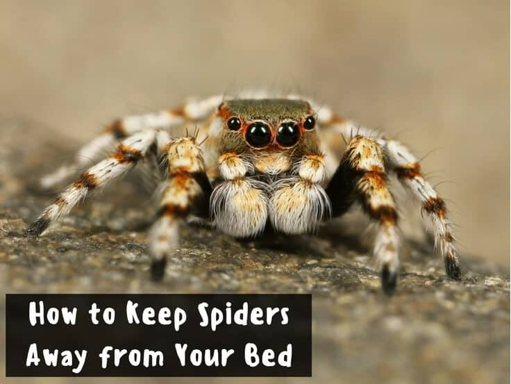 how to keep spiders away from your bed for your massage