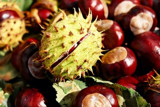 Use Chestnuts to Keep Spiders Away