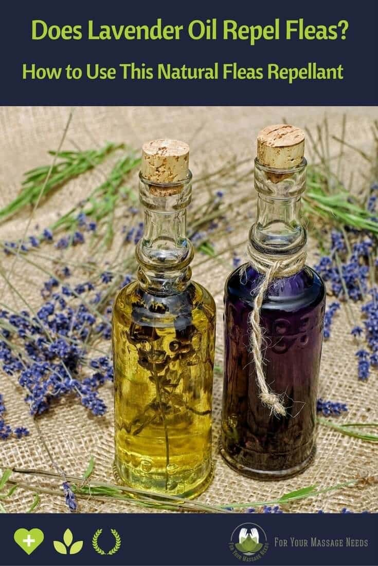 Does Lavender Oil Repel Fleas Tips On How To Use This